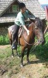 Bieszczadzkie Konie...
